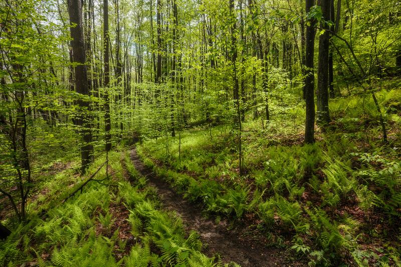 Scott's Run Trail 4554