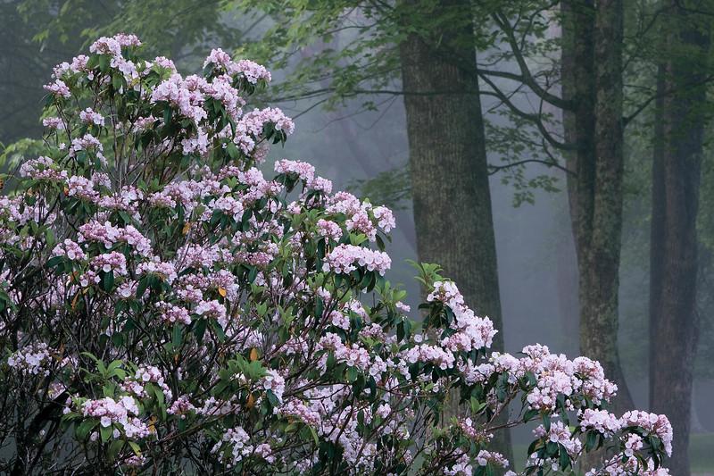 Grandview Fog 49