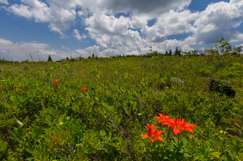 Dolly Sods Wilderness 6404