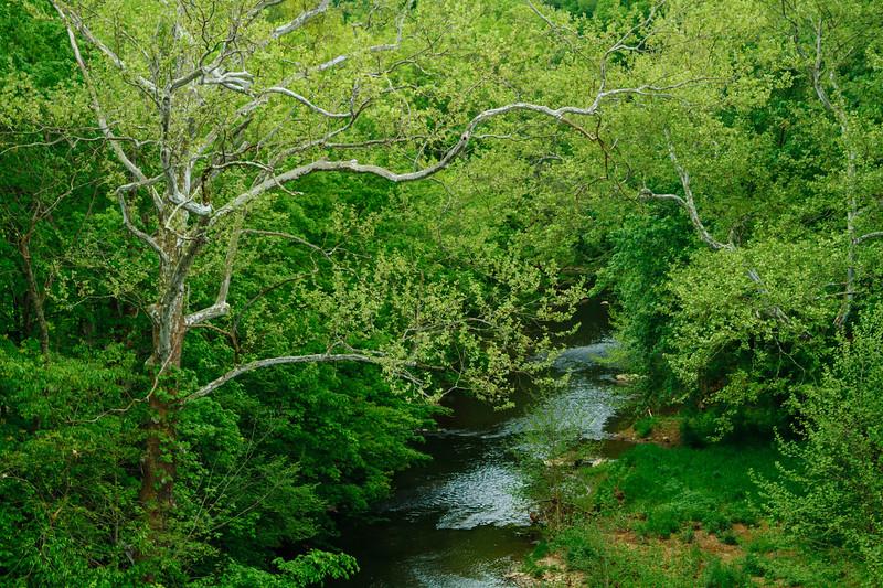 Dunkard Creek Spring 08