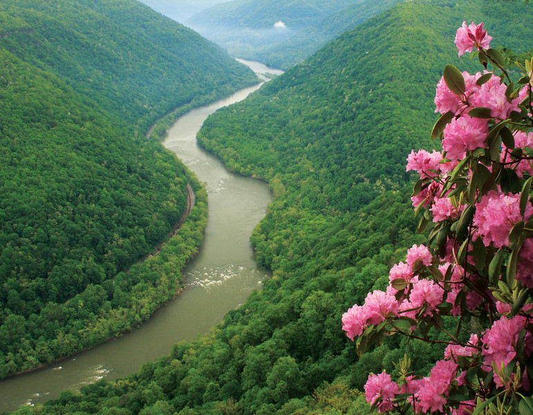 New River Rhodendron 21