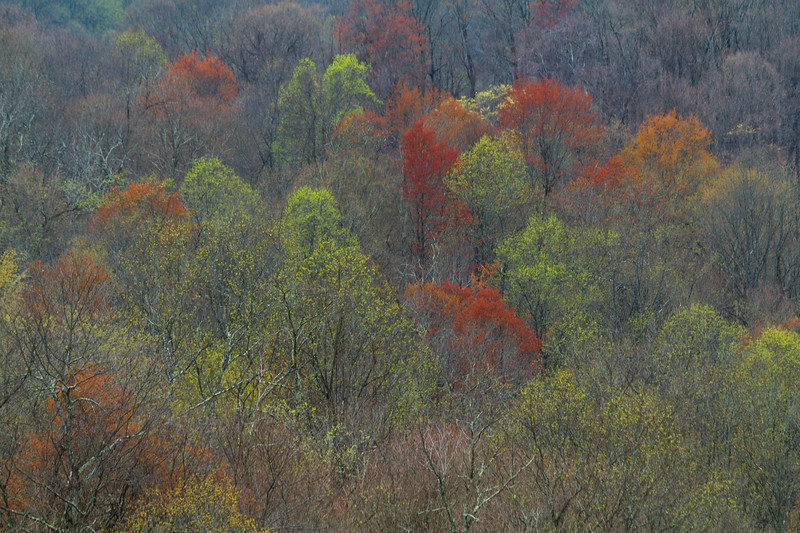 Spring Forest Wetzel 8937