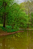 Bluebells Hughes River 0494L