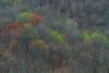 Spring Forest Wetzel 8946