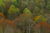 Spring Forest Wetzel 8959