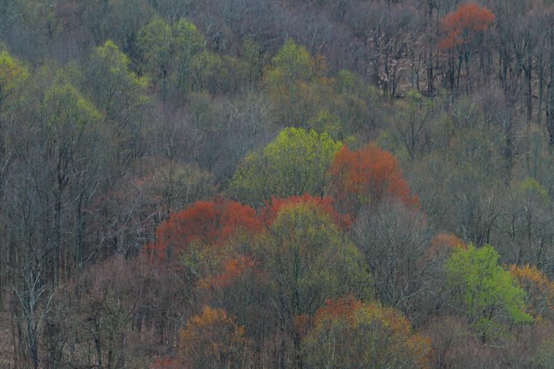 Spring Forest Wetzel 8948