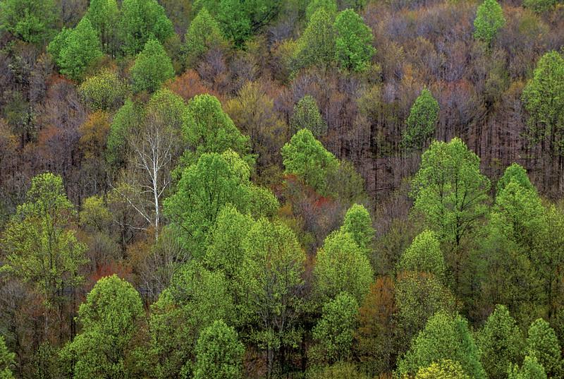 Spring Forest 36