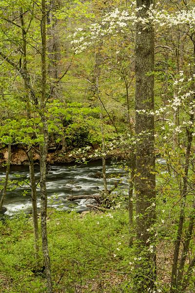 Dunloup Creek 212V