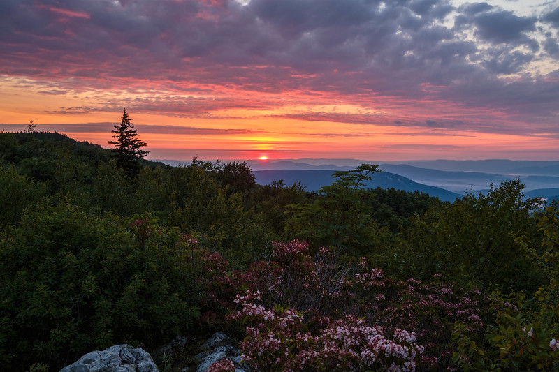 Dolly Sods Sunrise 7716
