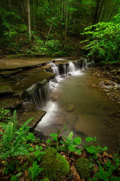 Fall Branch Falls 8483