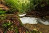 Lower Nuzum Falls 4184