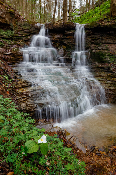 Trillium and Waterfall 7936-36