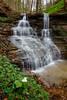 Trillium and Waterfall 7936-36
