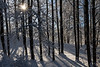 Winter Wood 9342