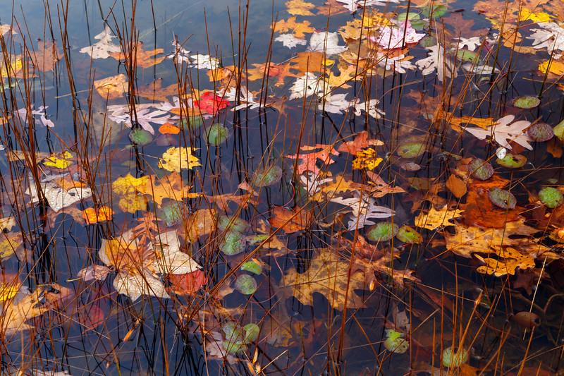 Chestnut Ridge Pond 7389