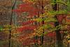 Autumn foliage near Wileyville in Wetzel County, WV