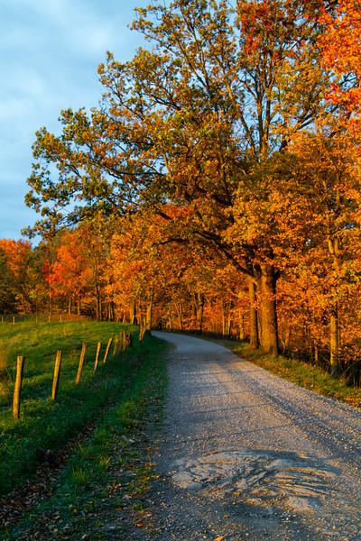 Lynn Camp Road Morning 9519