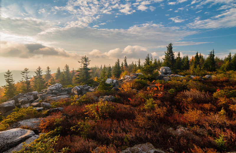 Dolly Sods Morning 8432