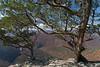 Cave Mountain Cedars 82