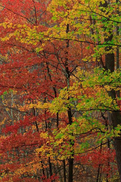 Wetzel Foliage 3506
