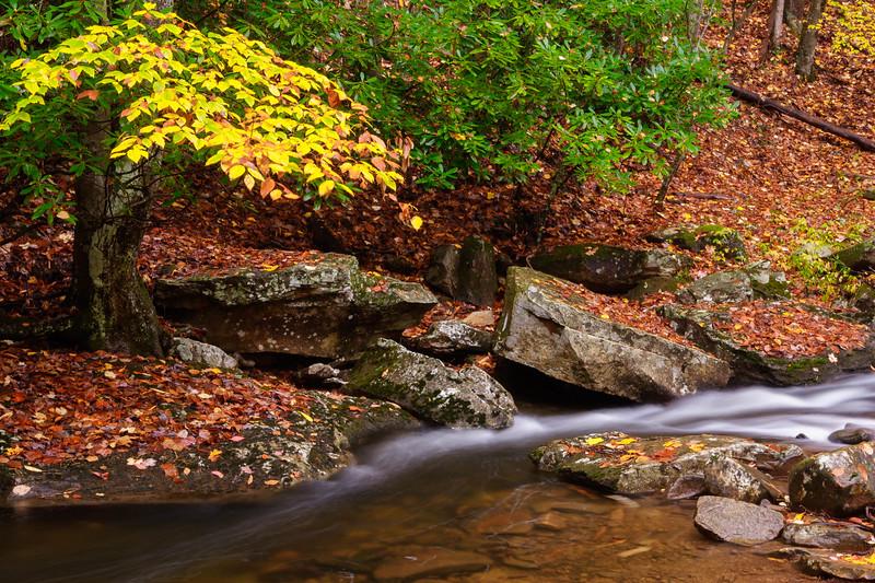 Laurel Fork Holly River SP 8561