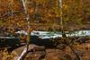 Valley Falls Sycamores 9419