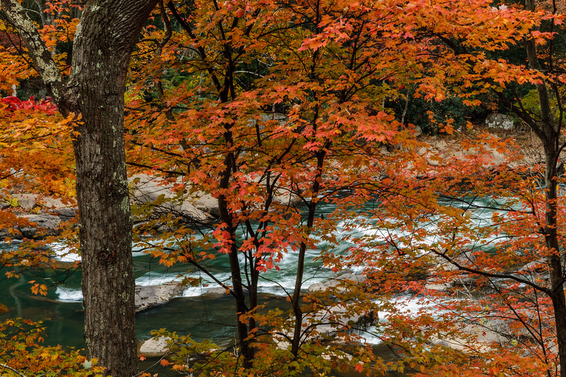 Tygart Valley Foliage 9726