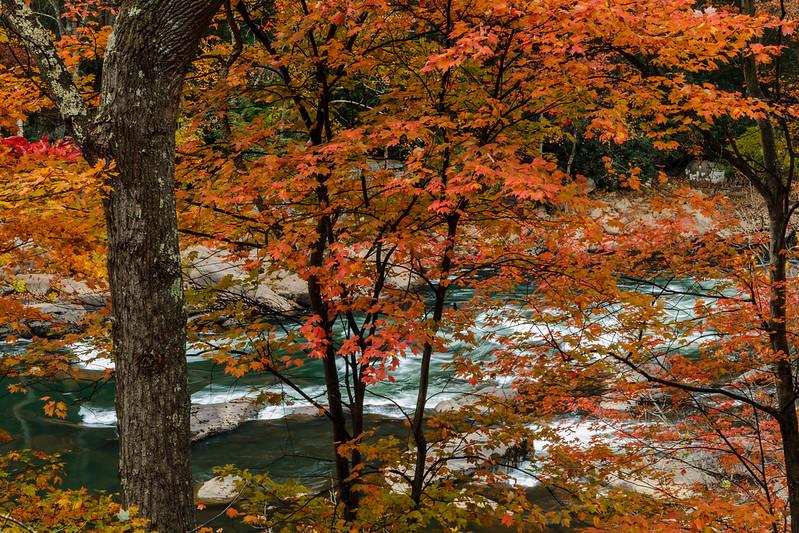 Tygart Valley Foliage 9726
