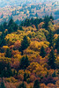 Spruce Knob Forest 7058