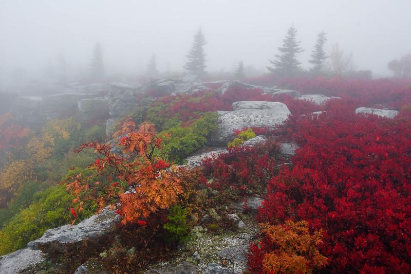 Bear Rocks Fog 4542