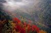 Blackwater Canyon Fog H