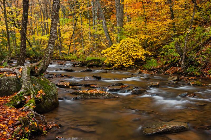 Hills Creek 0906