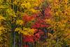 Wetzel Foliage 3531