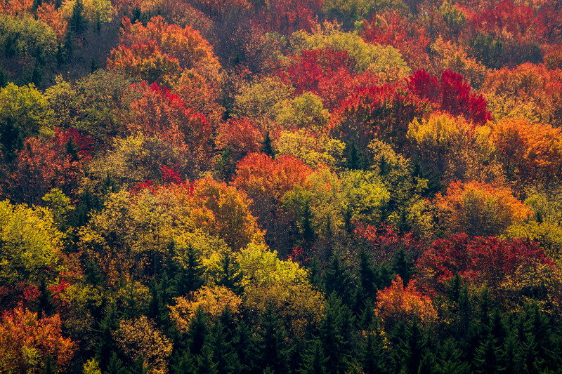 Spruce Knob Lake Forest 7031