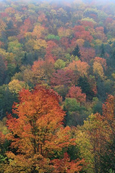 Black Mountain Foliage 8994