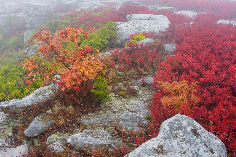 Bear Rocks Fog 4546