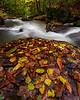 Glady Creek Marion 9563