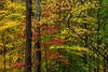 Wetzel Foliage 3522