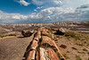 Petrified Forest 13