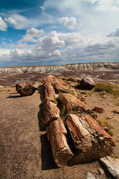 Petrified Forest 20