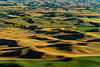 The Palouse 14