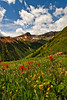 Ophir Pass Flowers 16 L4