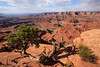 Dead Horse Point 2120