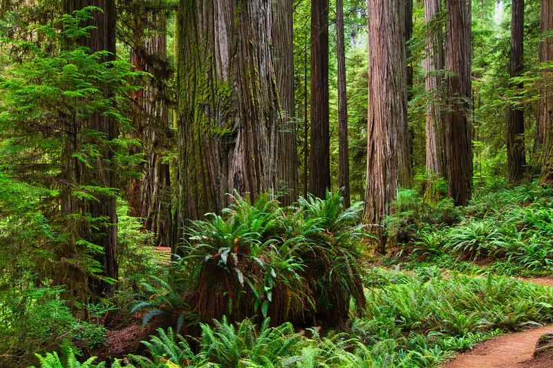 Redwoods 42L