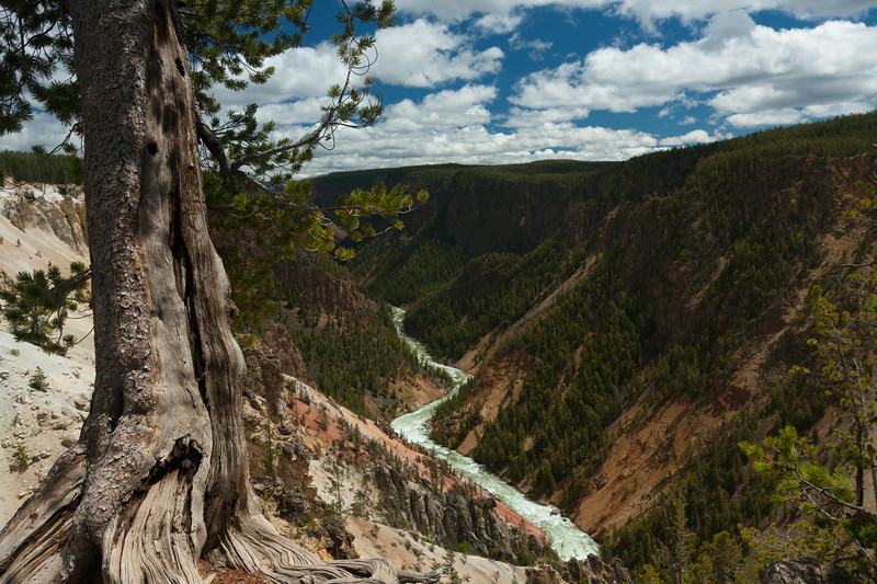 Yellowstone Canyon 61