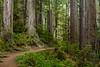Redwoods 78