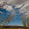 The only place we saw ocotillo was along the main park road as we drove in from the south. Luckily the plants were blooming and don't the clouds add a nice touch?
