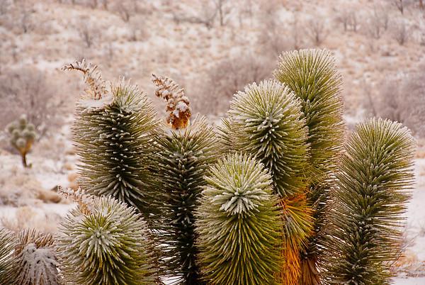 Mojave 2009