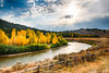 Bright yellow cottonwood trees line the banks of the Gros Ventre River just below Slide Lake in Jackson Hole Wyoming during a turbulent autumn day.