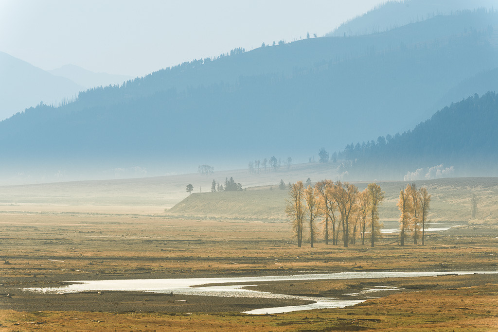 Yellow cottonwood trees grow along the Lamar River in the Lamar Valley in Yellowstone National Park in early autumn.